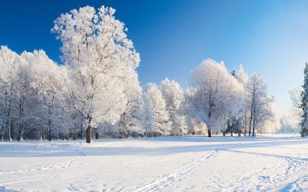 Imagem do inverno lindo e perfeito.
