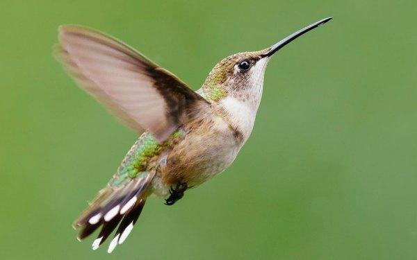 pássaro voando atrás de flores