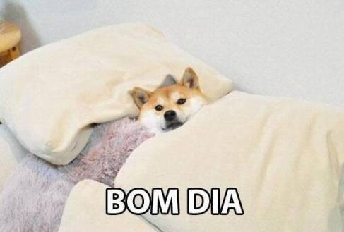 Bom dia engraçado Tumblr friozinho