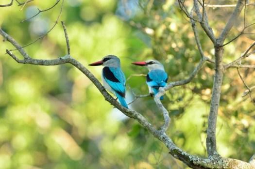 pássaro na árvore raras