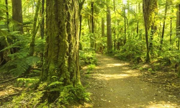 paisagem da floresta verde