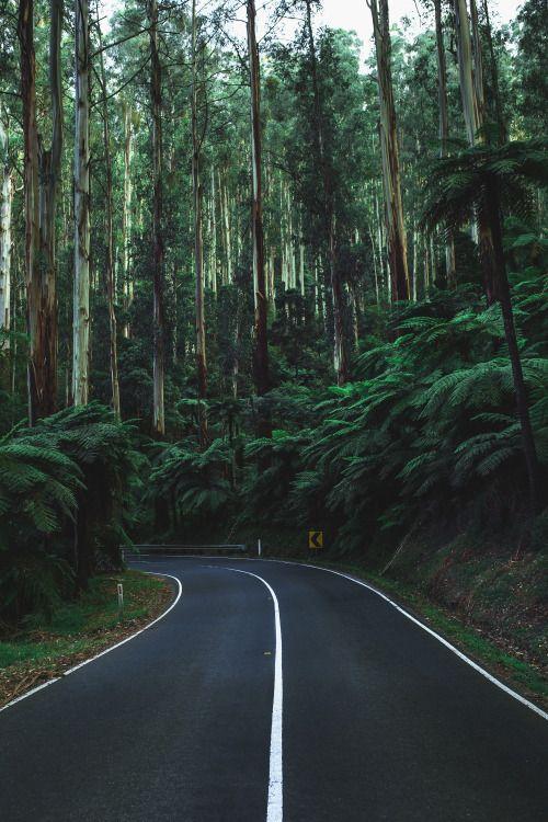 papel de parede estrada florestal