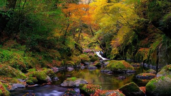 Linda paisagem da floresta