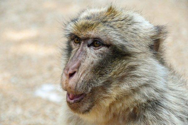 Foto de macaco na natureza.