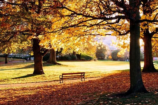 Estação belíssima do outono.