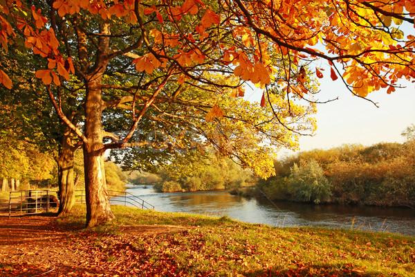 Imagem perfeita da estação outono.