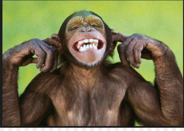 Imagem de macaco no zoológico sorrindo.
