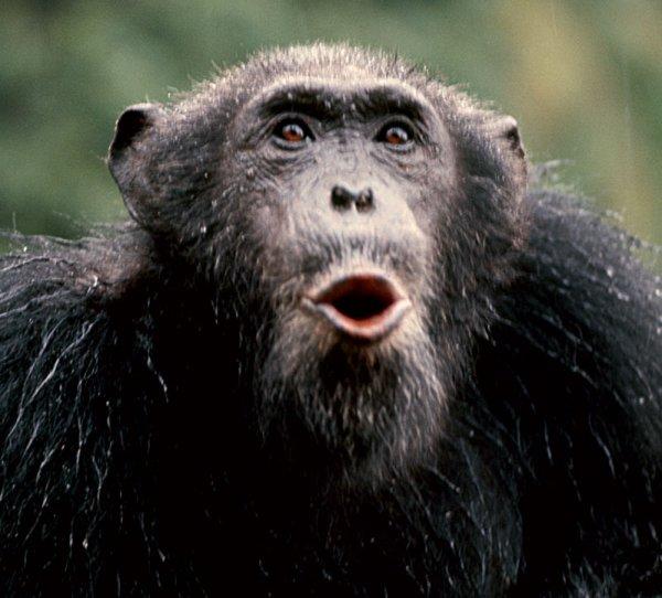 Fotos de macacos.
