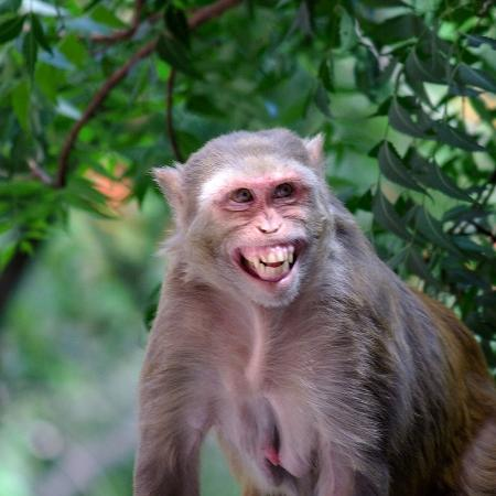 Olha só esse macaco sorridente.