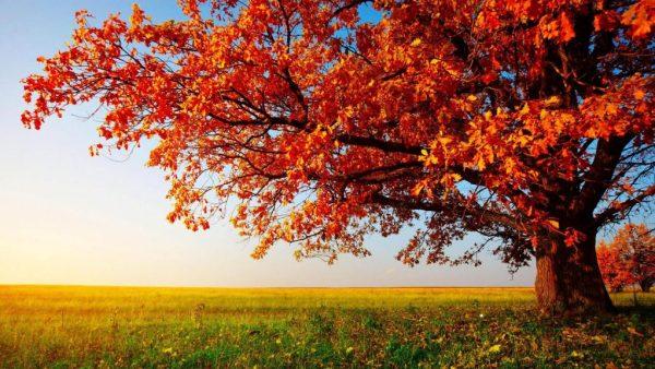 Estação linda de outono.