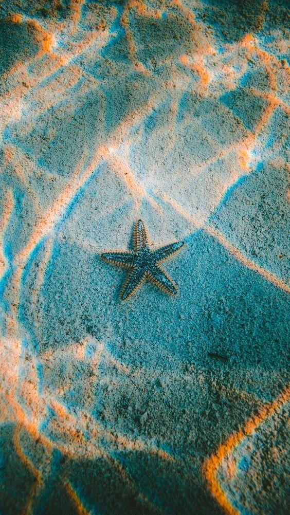 Papel de parede estrela do mar