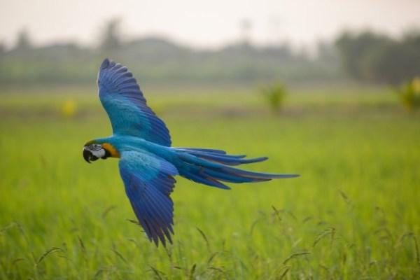 sobrevoando pássaro impressioanante