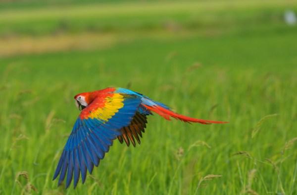 pássaro impressionante voando no campo