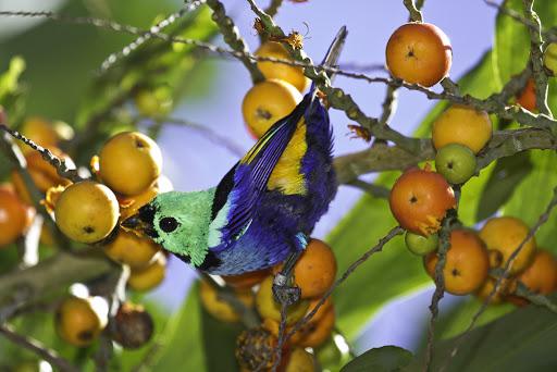 pássaro na árvore de frutas