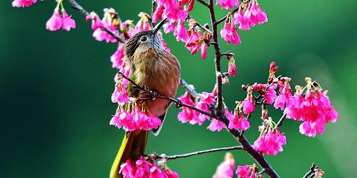pássaro na árvores de flores