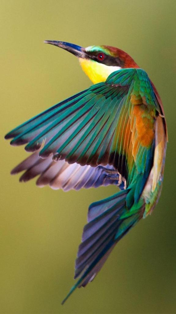 pássaro colorido papel de parede