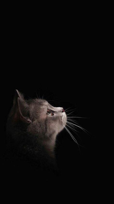 Papel de parede gato