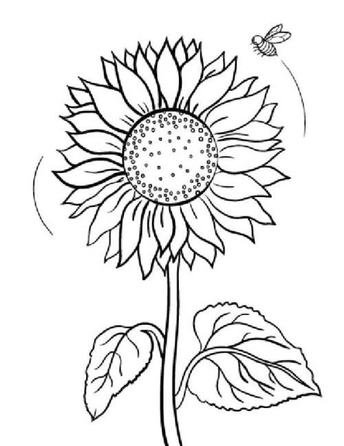 desenho de flores lindona