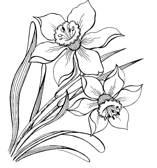 verdes desenho de flores