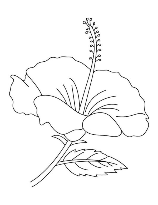 desenho de flores florzona