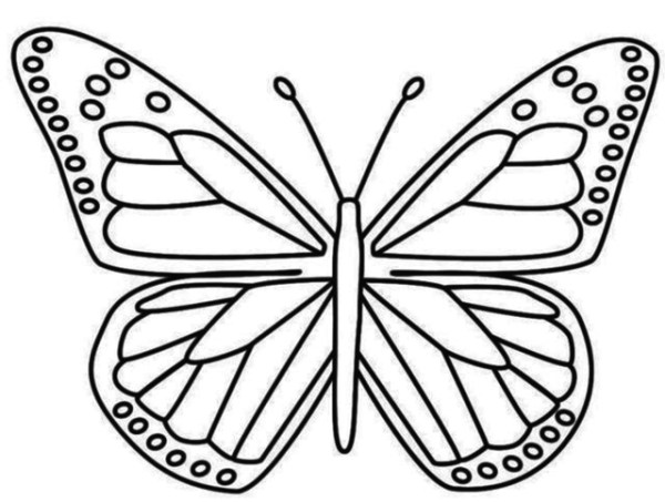 Imagens de borboletas para colorir e baixar