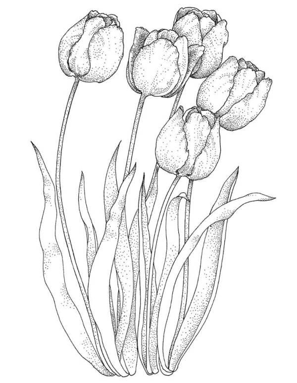 desenho de flores jardim