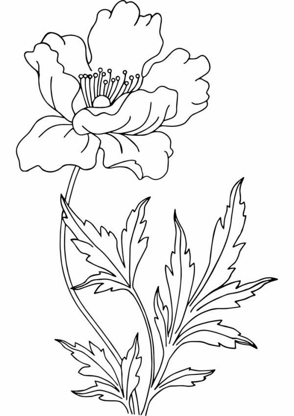 bom desenho de flores