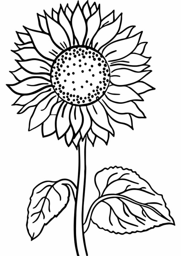 desenho de flores amarelas