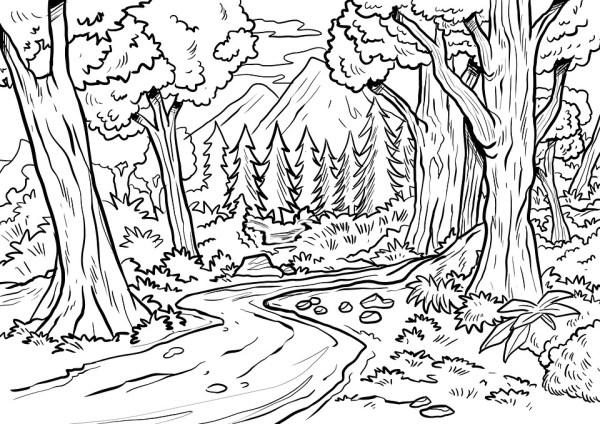 paisagem da natureza floresta