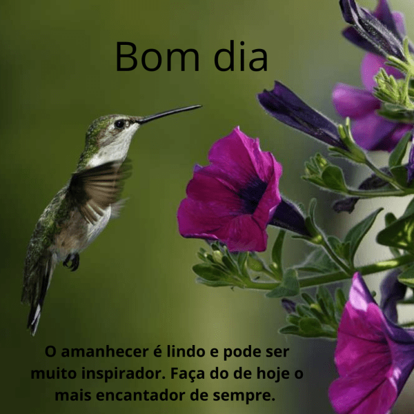 Imagens de bom dia com flores para grupo