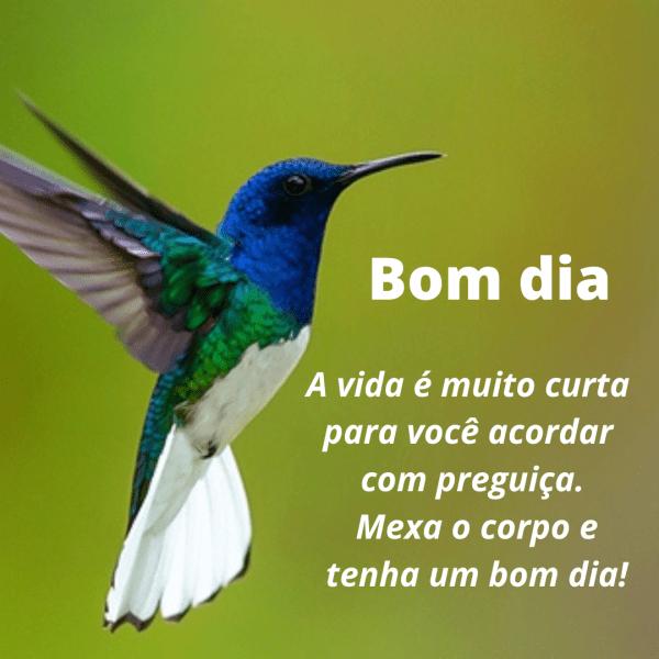 Frases de bom dia com imagens de flores e pássaros