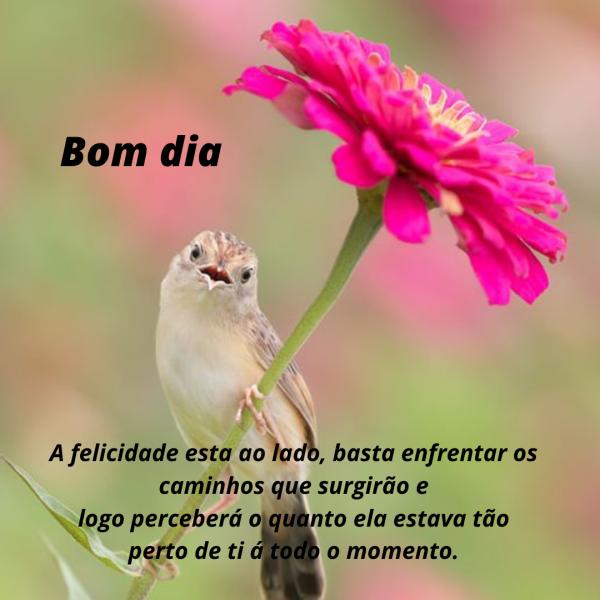 Pássaros  com frases para bom dia