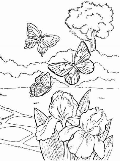 paisagem da natureza borboleta