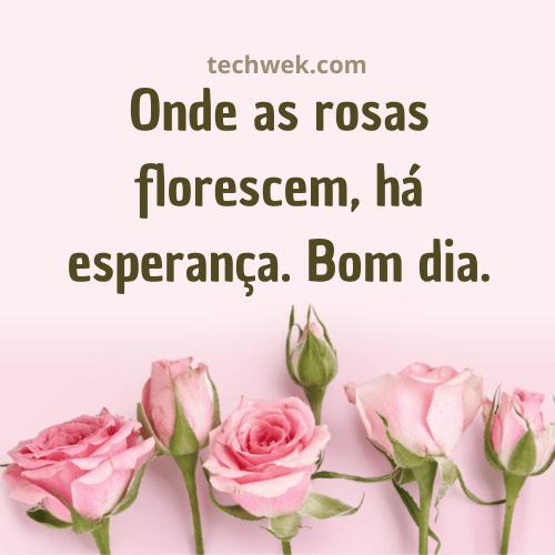 rosas para uma manhã linda