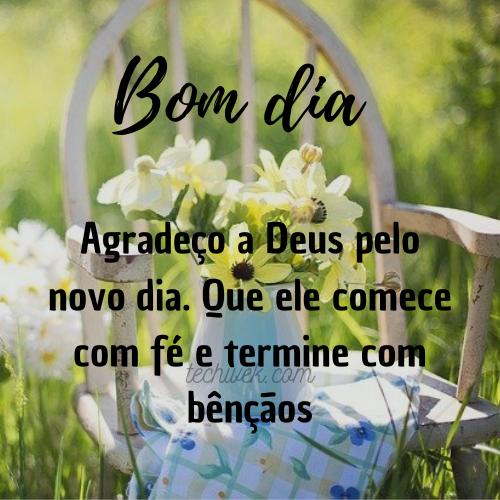 frases com flores do campo de bom dia
