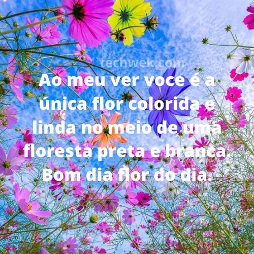 flor para o dia