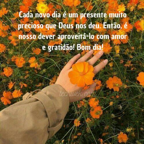 lindas frases de bom dia com flores do campo
