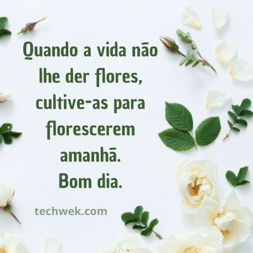 rosas branca de bom dia
