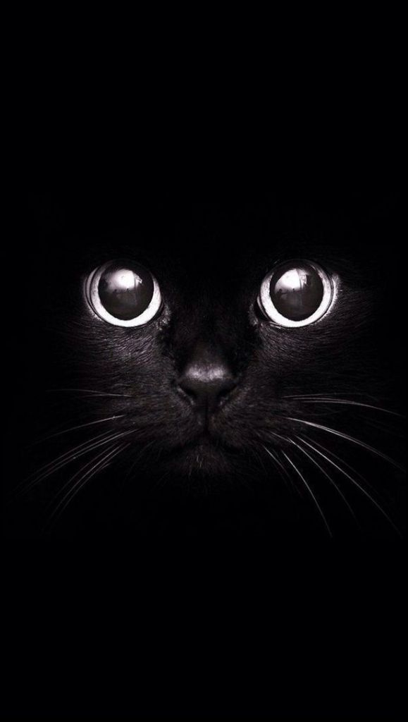 Gato de Papel de parede preto