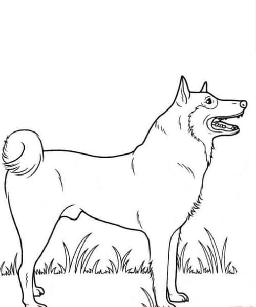 Desenho lindo e fofo de cachorro para colorir