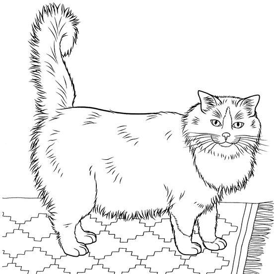 Desenhos de gatos para pintar único