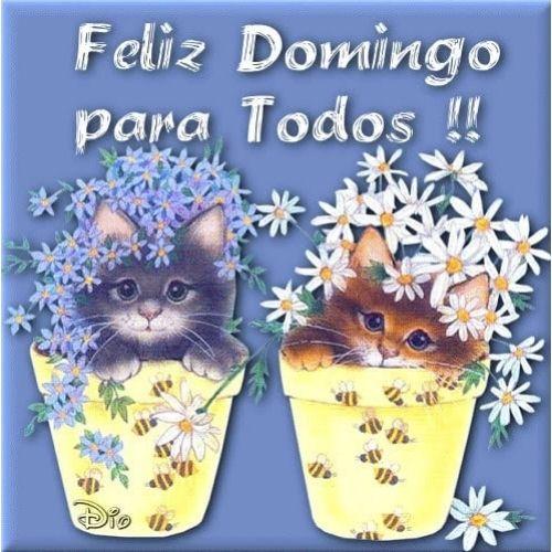 feliz domingo com gatinho e flores