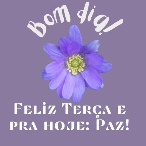 flor azul de boa terça feira
