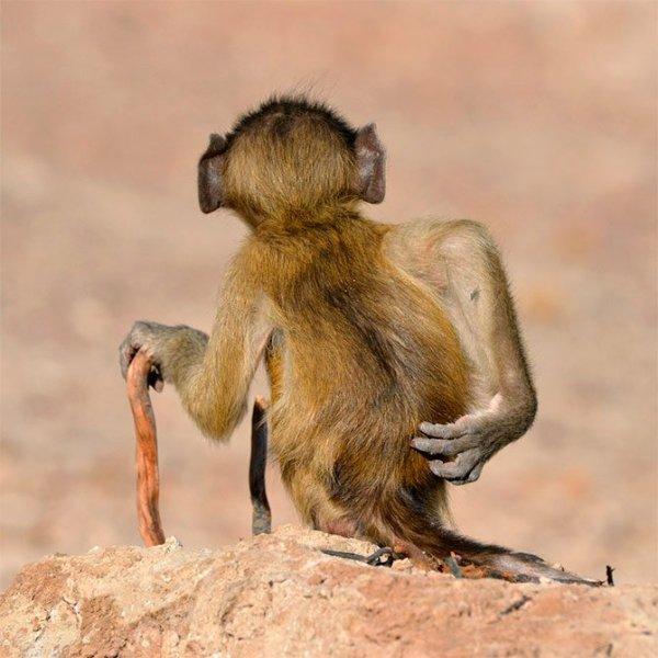 Fotos engraçadas de Animais macacos