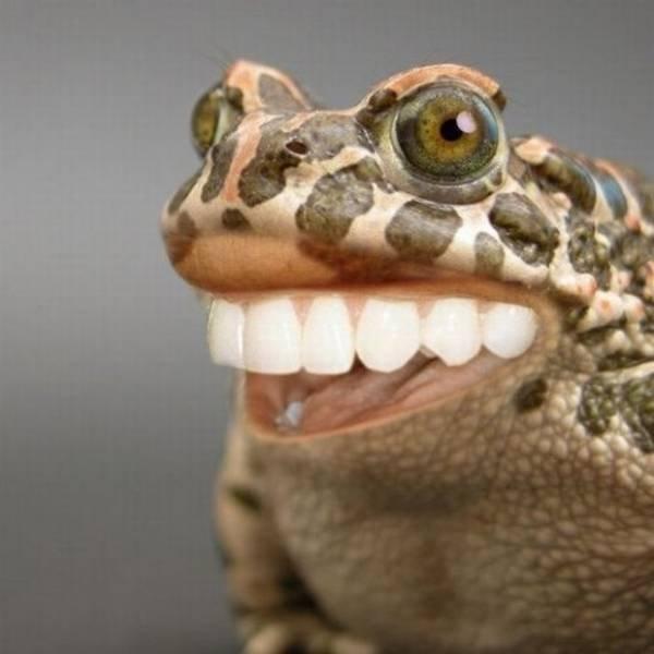 Fotos engraçadas de Animais legais