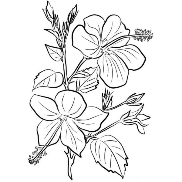 Desenho de uma flor para colorir e dá de presente