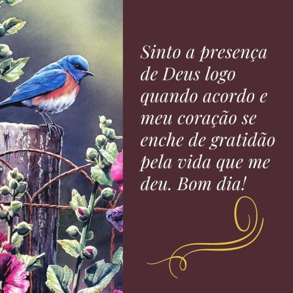 bom dia com Deus e lindo pássaro