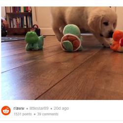 reddit video player