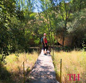 Especial Camino de Santiago con perro: Preparación Fisica y Recuperación