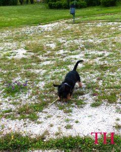 La importancia de los juegos de olfato para perros